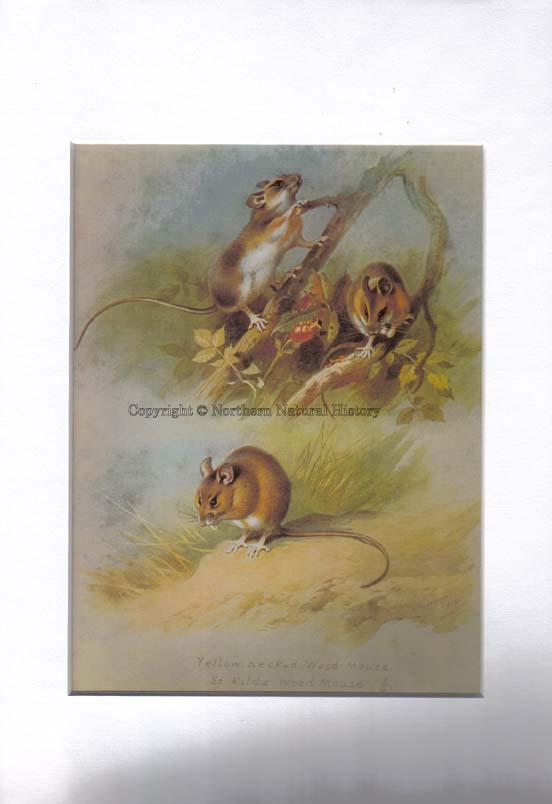 Antiquarian Natural History Books Uk